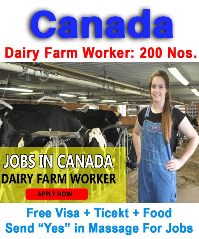 Dairy Farm Customer Service Representative
